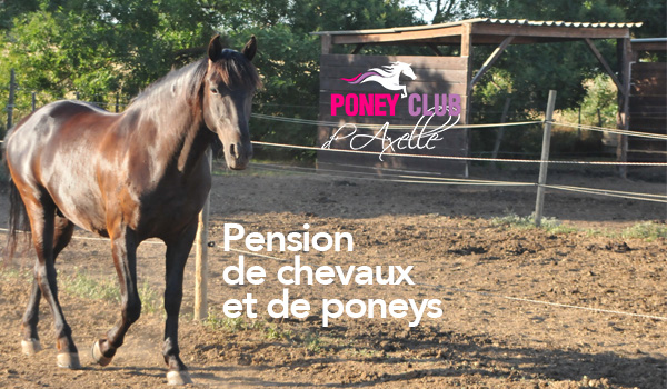 Pensions Box et Paddock